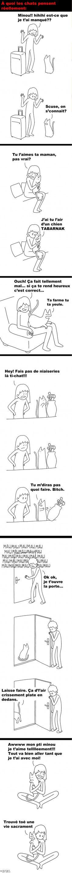 À quoi pensent réellement les chats