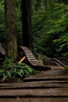 Boarded~woodland walk