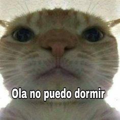 No tengo vida kok kok solo veo memes kok kok me quiero morir kok kok. Memes Humor, Cat Memes, Funny Images, Funny Pictures, Current Mood Meme, Funny Spanish Memes, Cute Love Memes, Donia, Meme Stickers