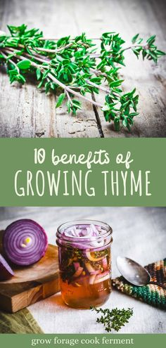 Thyme is an amazing healing herb that has culinary and medicinal uses as well as being good for the garden. Learn about all the reasons to grow thyme in your herb garden and how to use it in recipes! Aromatic Herbs, Healing Herbs, Medicinal Herbs, Thyme Recipes, Herb Recipes, Benefits Of Gardening, Herb Gardening, Growing Herbs At Home, Herbal Magic