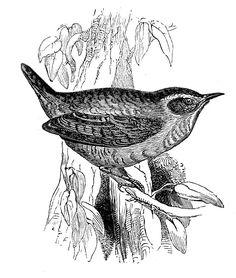 Resultado de imagen de bird vintage black and white clipart