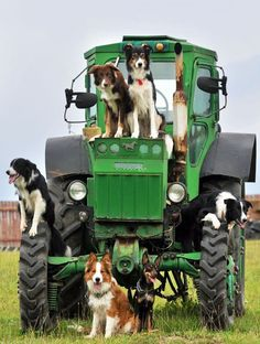 John Deere Going To The Dogs