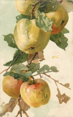Five apples on branch by Catherine Klein ~ 1910.: