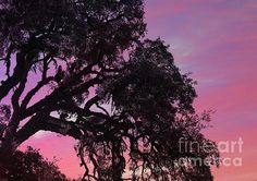 The Sun Sets on Another Day by Clare Bevan  #sunset #treesilhouette #spain