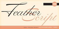 Feather Script - Webfont & Desktop font  MyFonts
