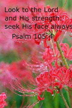 Psalm 105:4. Look to The Lord...