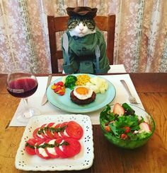 Cosplaying Cat Chef Dines With His Mom Every Night In Different Outfit Big Cat Family, Cat Dressed Up, Dog Emoji, Cat Cosplay, Dog Suit, Cat Dresses, Woman Dresses, Tiger, Funny Animal Pictures