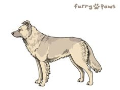 Furry Paws // WCH Kip's Ragefire Chasm [2xStm - 1.170] (13.1) C Isa Sab M's Kennel