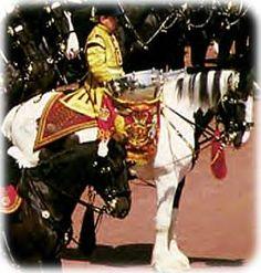 British Drum Horse on parade