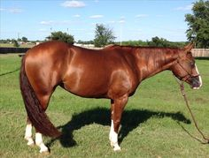 See this mare on Equine.com if you're in the market for a reined cow horse: http://www.equine.com/horses-for-sale/horse-ad-3662637.html
