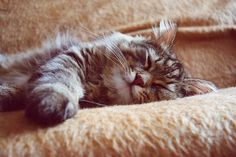 Image result for striped cat fur
