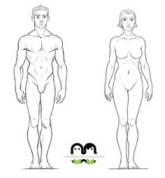 Loomis Male and Female Rotation by MastersOfAnatomy