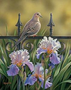 Three of my favorite things..Mourning Dove, Iron fence and Iris flowers..