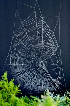 Activities: Make Spider Web Art! This requires the collecting of real spiderwebs, spray pain and construction paper.