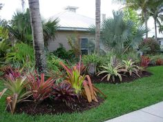 Florida Plants Landscaping, Home Landscaping, Front Yard Landscaping, Low Maintenance Landscaping, Low Maintenance Garden, Garden Edging, Garden Projects, Amazing Gardens, Tropical