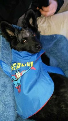 Police officer adopts severely beaten dog she helped save