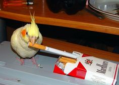 25 Hilarious Birds Photos Make You Laugh Till You Drop Funny Images, Funny Photos, Cute Baby Animals, Funny Animals, What Is A Bird, Funny Birds, Rare Birds, Cockatiel, Parakeets