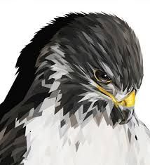 Image result for falcon tattoo