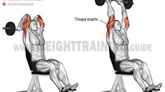 Overhead EZ bar triceps extension exercise
