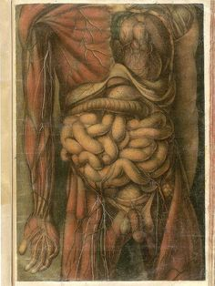 Tableau V from Anatomie g& by Jacques Fabian Gautier d& Antique Illustration, Illustration Art, Digestive System Anatomy, Anatomy Park, Anatomy Sculpture, Anatomy Practice, Anatomy Models, Human Body Anatomy, Medical Anatomy