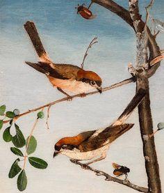 Csontváry Kosztka Tivadar (1853-1919) - Tövisszúró gébicsek Post Impressionism, Art School, Birds, Colours, Canvas, Animals, Paintings, Tela, Animales
