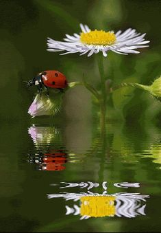 LOVELY LITTLE LADYBUG SENT FROM HEAVEN ABOVE PLEASE WATCH OVER MY GARDEN AND FILL IT WITH LOVE.