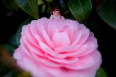 お花の #フチ子 #dolls #toys
