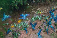 Recording Things That Go Bump In the Night in the Peruvian Amazon! http://www.espacularaiesa.com/2014/01/02/recording-things-go-bump-night-peruvian-amazon/