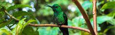 Reisetipps & Reiseberichte von Costa Rica