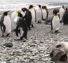 The Cute Project - Collecting the World's Cuteness!....... LoVe the seal's photo bomb hahaha