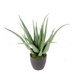 Jardin Vertical Artificial, Cactus Plants, Aloe Vera, Recherche Google, Products, Artificial Tree, Fake Plants, Vertical Gardens, Artificial Flowers