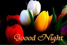 Beautiful Good Night Wishes Images Pics Wallpaper for Whatsapp - Good Morning Images