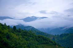 rize çayeli by Emr - Photo 157314777 - 500px