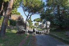 Le pecore invadono l'Appia Antica.