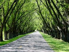 Tunnel of Trees, Manistee, Mi.  I've been on this road, it's awesome.