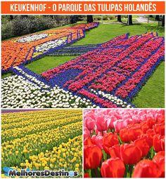 Keukenhof, o parque das tulipas holandês