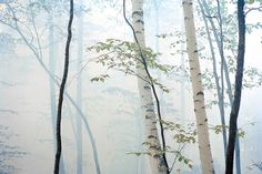 Martien-Mulder, Trees Mist, 2005