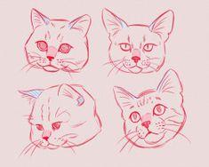 Animal Sketches, Animal Drawings, Drawing Sketches, Cat Face Drawing, Human Drawing, Cat Anatomy, Animal Anatomy, Nature Sketch, Warrior Cats Art