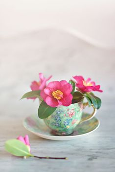 Dark pink camellias in antique all-over-floral teacup and saucer on a white marble dresser. Beautiful Bouquet Of Flowers, Flowers Nature, Pretty Flowers, Pottery Painting Designs, Vintage Cups, Floral Bouquets, Afternoon Tea, Watercolor Flowers, Party Centerpieces