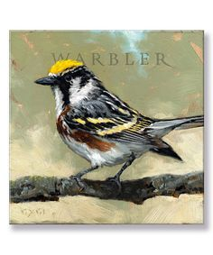 Warbler Giclee Gallery-Wrapped Canvas by Darren Gygi Home Collection #zulily #zulilyfinds