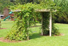 Trellis and Grape Arbor. Love the swing! Trellis and Grape Arbor. Love the swing! Arbors Trellis, Diy Trellis, Trellis Ideas, Grape Vine Trellis, Grape Vines, Permaculture, Muscadine Vine, Grape Plant, Grape Arbor