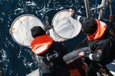 El Ártico, afectado por la contaminación de plástico