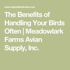 The Benefits of Handling Your Birds Often | Meadowlark Farms Avian Supply, Inc.
