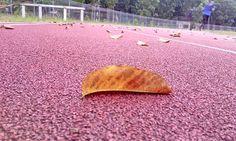 Kepasrahan daun yang berguguran