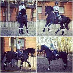 Dressage in Ukrain. Dressage training.  Dressage stallion.
