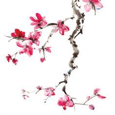 Plum blossom branch. On shoulder