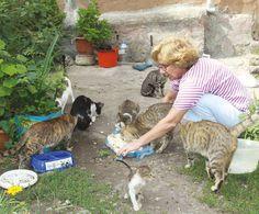 Sokak Kedilerinin Koruyucu Meleği - http://www.aylakkarga.com/sokak-kedilerinin-koruyucu-melegi/