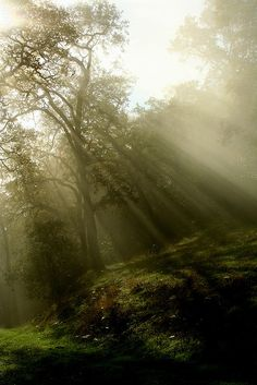 The clearest way to the universe is through a forest wilderness. John Muir