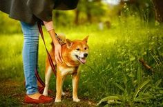 Leash Training: Follow these focus exercises to get your dog's attention and help keep them safe when walking.