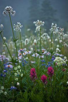La boîte de couleurs de la nature / Quelque chose de différent  par  Fresnatic  sur  Flickr